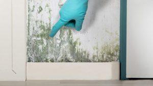 Best Mold Resistant Paints Reviews