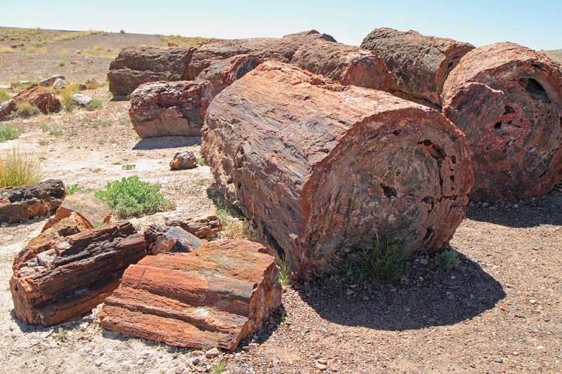 What Is Petrified Wood