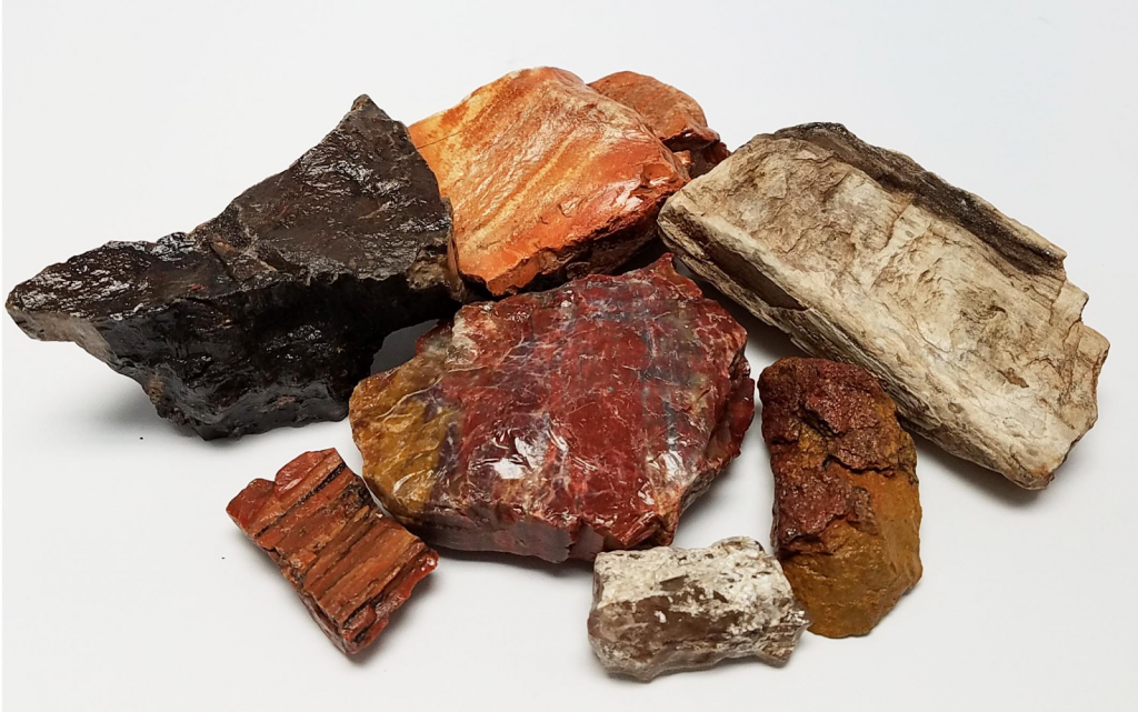 Petrified Wood Types
